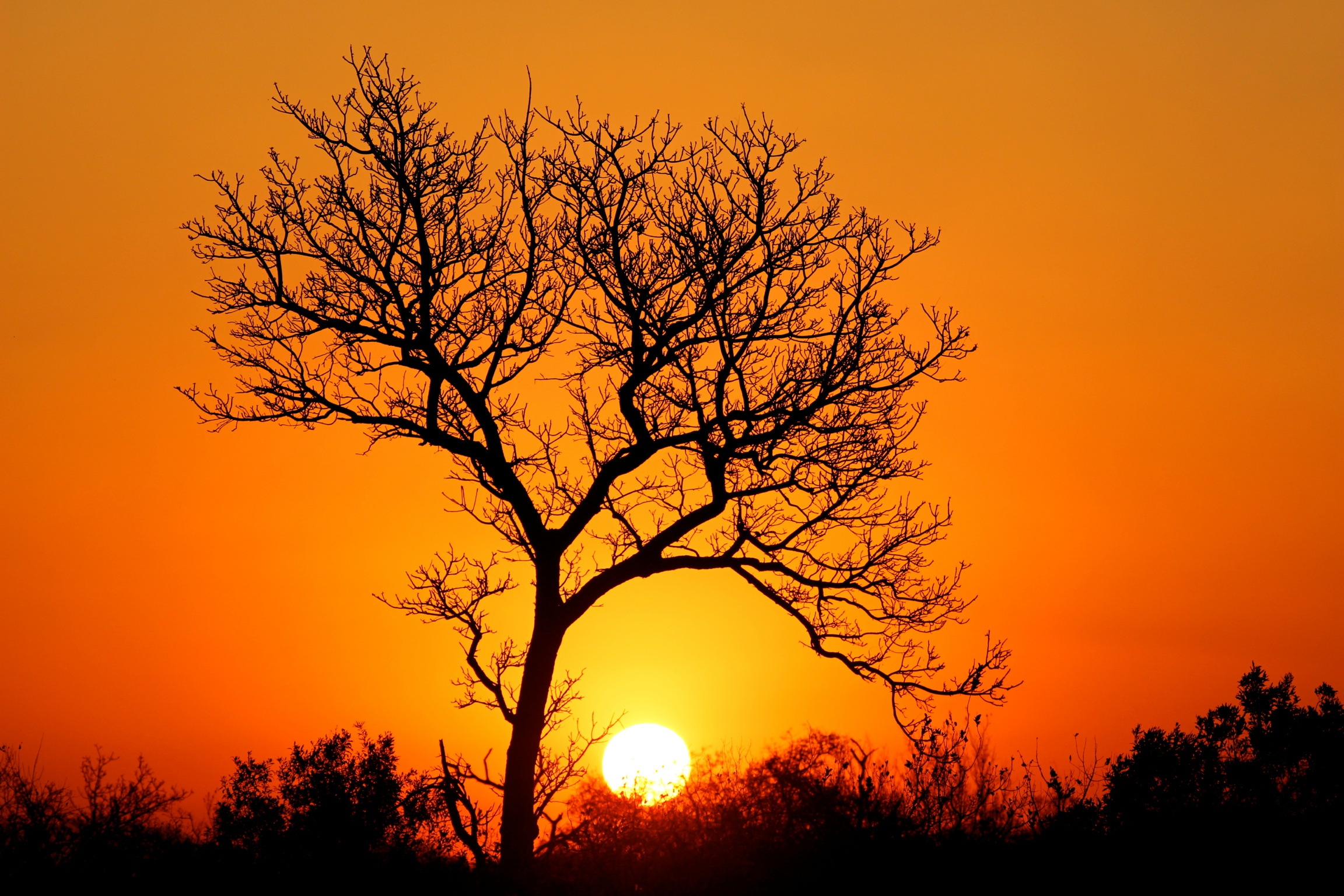 safari planning africa sunset