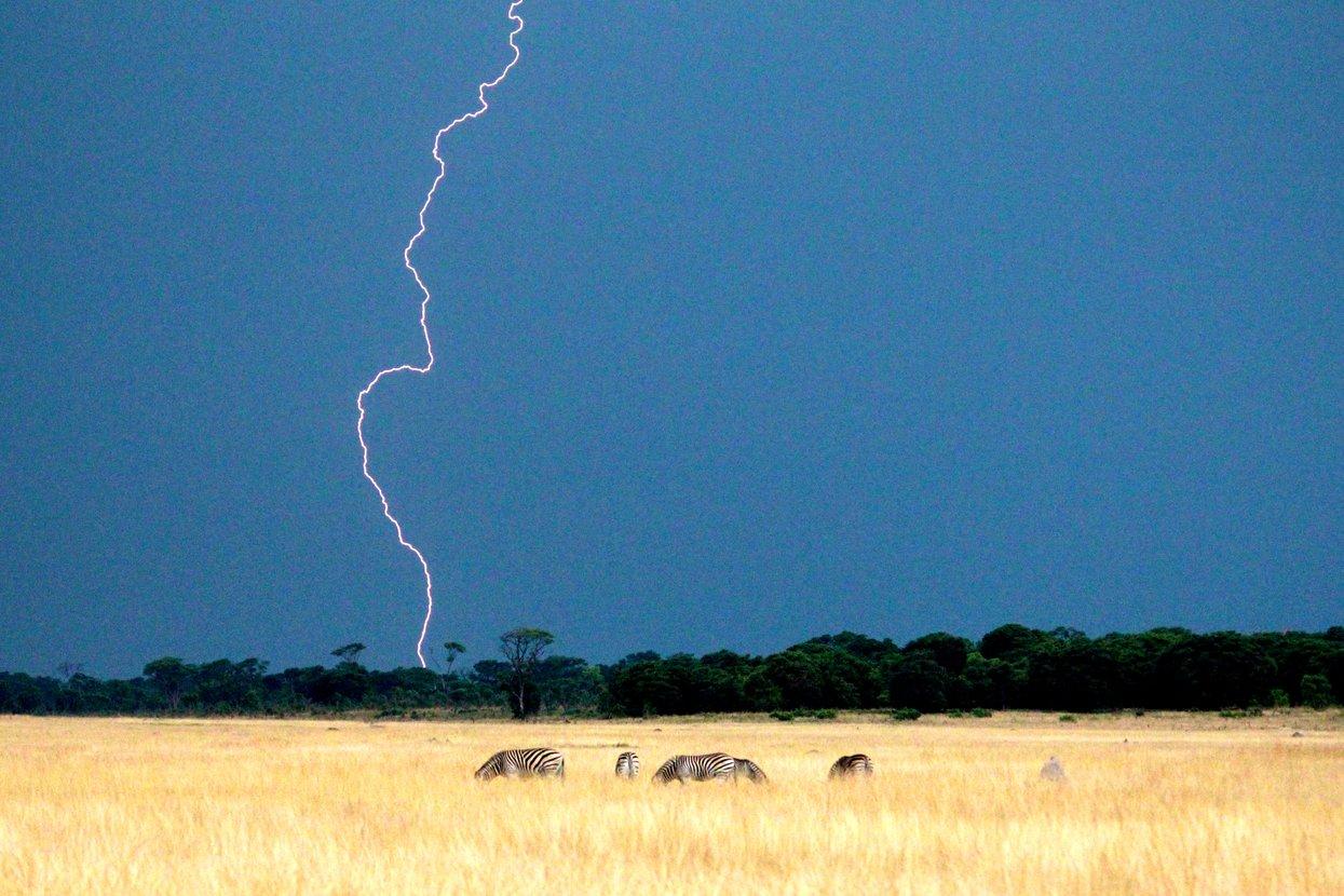 safari planning zebras africa