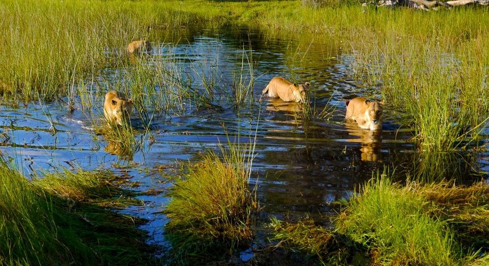family travel safari planning